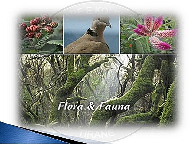 31st October 1995, Albania accedes to the Convention for fauna and flora