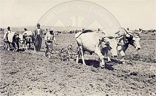 17 Nëntor 1946, Reforma Agrare