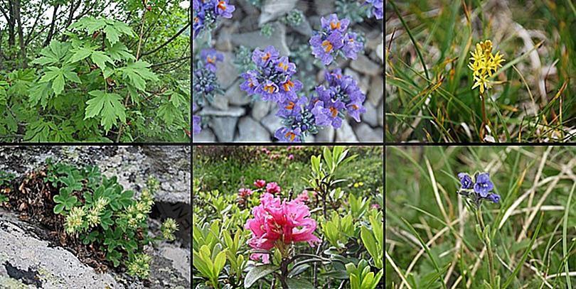 19 Janar 1993, Shqipëria miratoi një ligj për mbrojtjen e bimëve